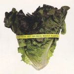 stalk of green healthy lettuce with measuring tape around it