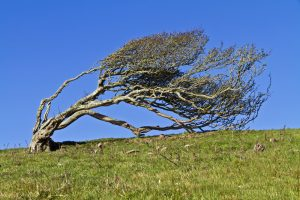 Bent tree represents what happens to a human child's body without chiropractic