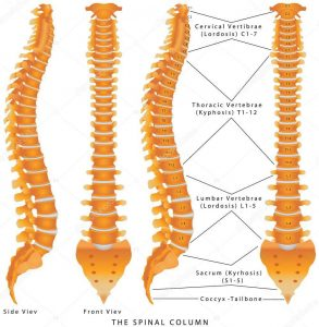 Correct spinal alignment
